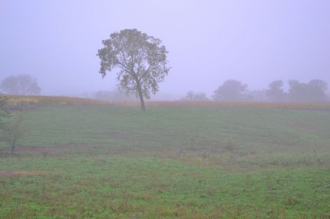 Fog covers a southern Ohio farm.
