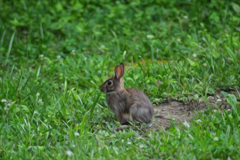 Mr. Bunny.